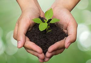 hands nurturing growing plant 630x284