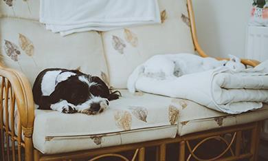 Dog on empty sofa