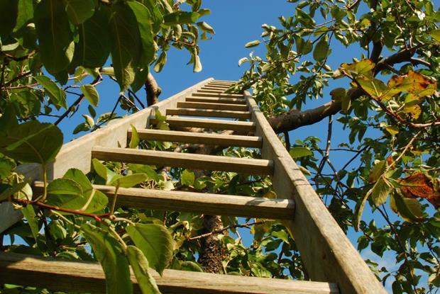 Ladder image